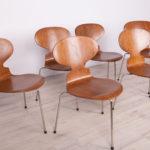 Komplet sześciu krzeseł Ant, proj. A. Jacobsen, Fritz Hansen, Dania, lata 50.